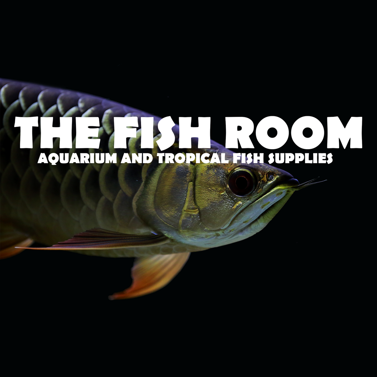 Tropical fish and aquarium online supply store – The Fish Room TFR