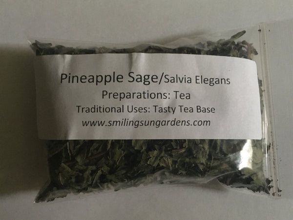 Pineapple Sage (Salvia Elegans)