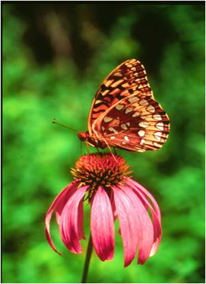 Butterfly Attracting Pre-Planned Garden