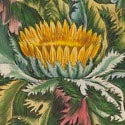 'I fainted at the sight of Hill's great work' - legendary botanical book comes to auction