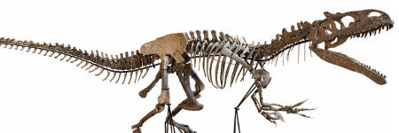 Allosaurus skeleton achieves $1.1m in Lyon