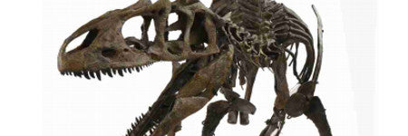 Juvenile allosaurus dinosaur skeleton to auction in November