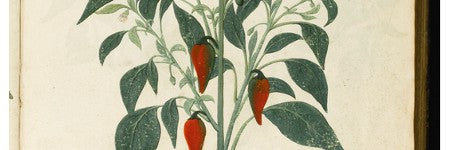 Van den Hoecke's Manuscript Florilegium headlines April 30 sale