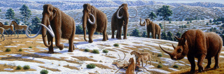 Mammoth skeleton family group to sell in Sussex