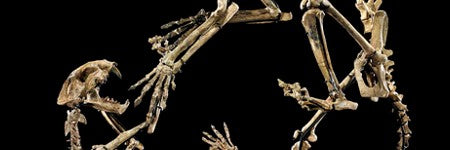 Duelling sabre-toothed cats to auction with $250,000 estimate