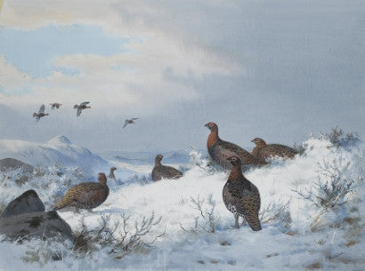 Grouse in snowy landscape