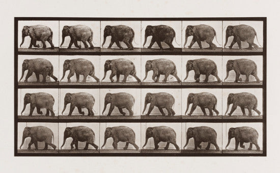 eadweard muybridge elephant