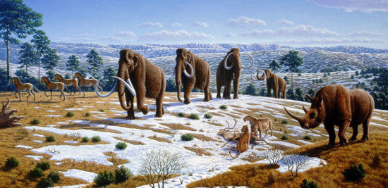 Mammoth family Wiki