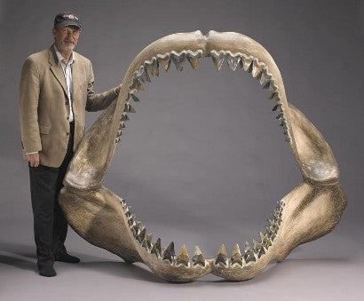 Dino teeth auction