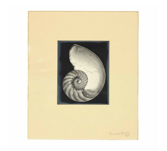 Nautilus Weston