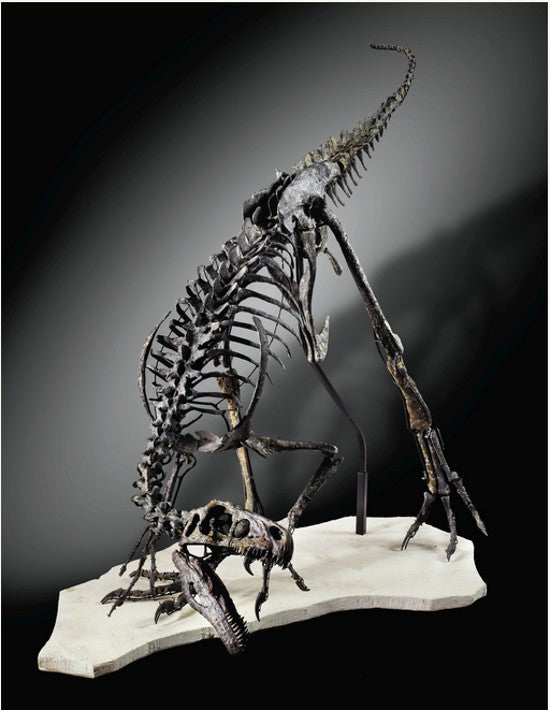 Ornitholestes skeleton
