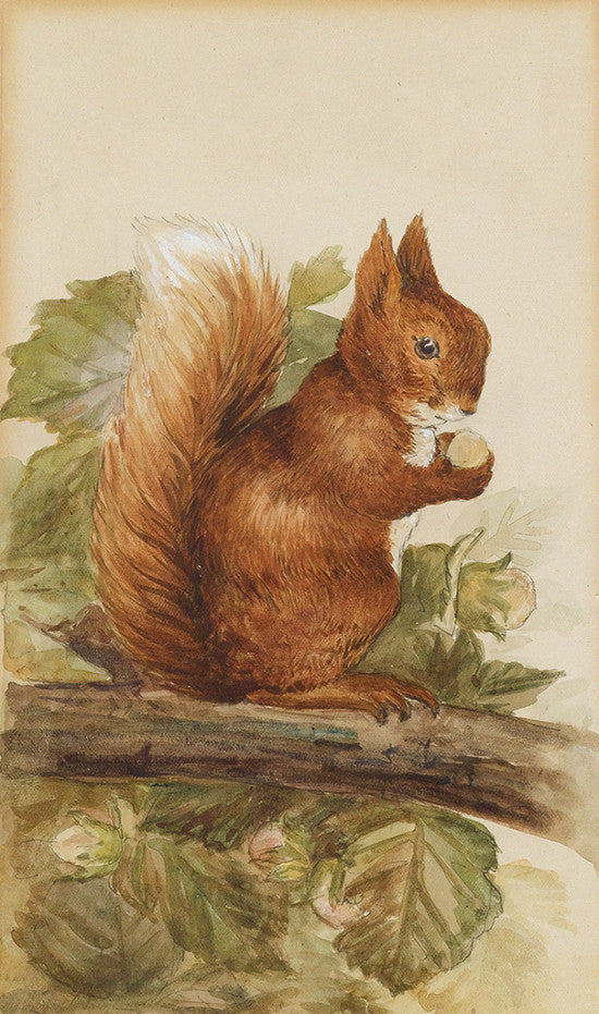 Squirrel Nutkin Swann