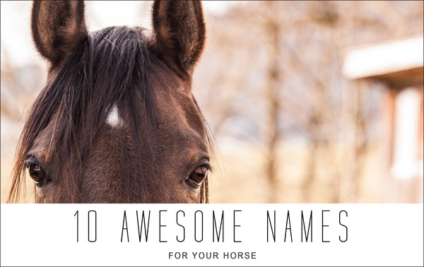 10 Awesome Names for Horses