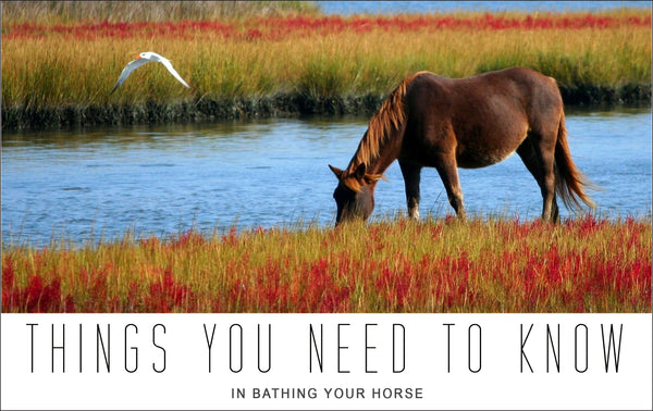 Things You Need to Know in Bathing Your Horse