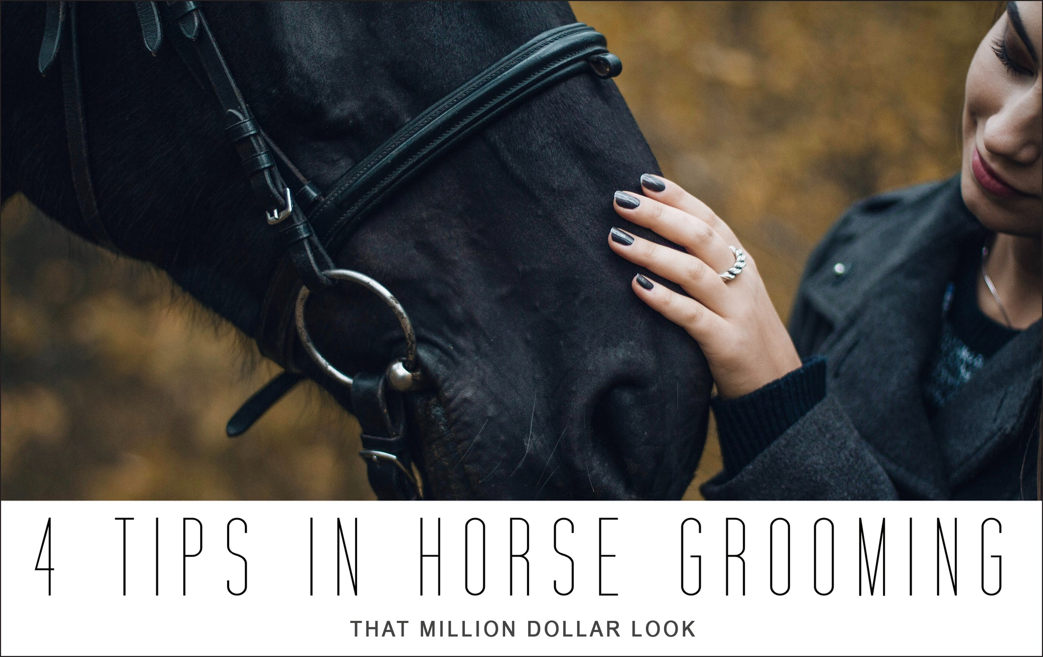 4 Tips In Grooming Your Horse