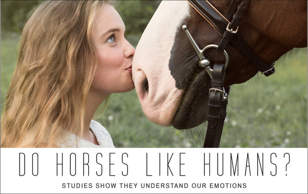 Do horses like humans? Studies show that horses do understand our emotions!