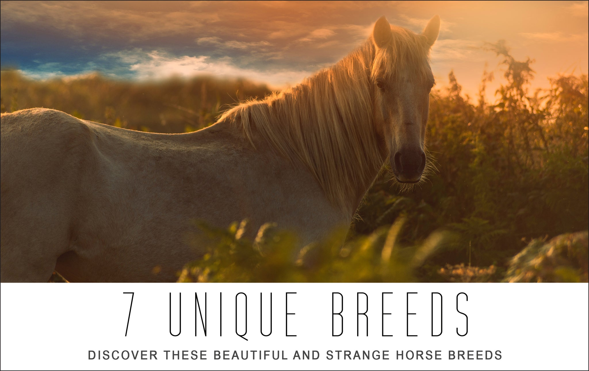 Discover These Beautiful And Strange Horse Breeds Three Wild Horses