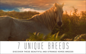 Discover These Beautiful and Strange Horse Breeds
