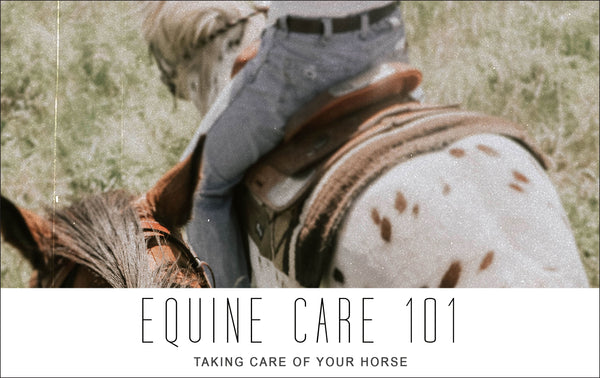 Equine Care 101: Taking Care of Your Horse