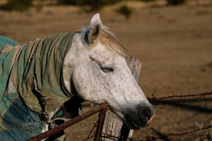 Can you guess, why don't horses sit or lie down even while sleeping?