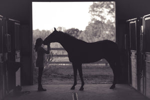 How do horses read human emotional cues?