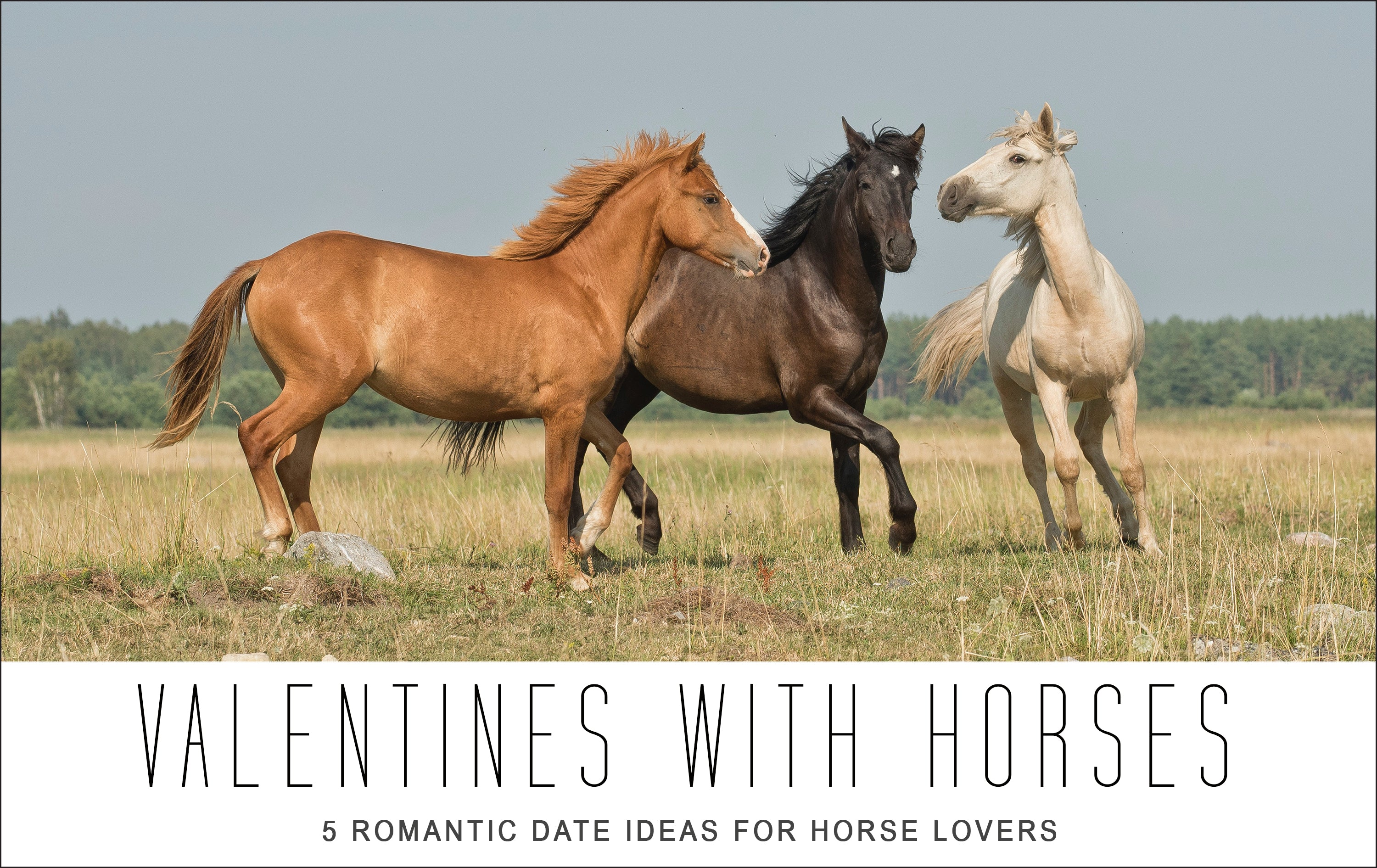 Valentines with Horses: 5 Romantic Date Ideas for Horse Lovers!