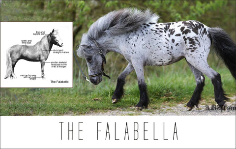 The Falabella
