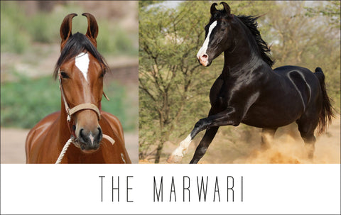 The Marwari