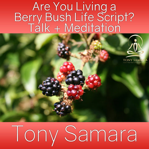 Are You Living a Berry Bush Life Script? Talk + Meditation (MP3 Audio Download) - Tony Samara Meditation