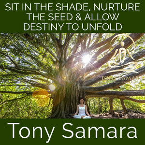 Sit in the Shade, Nurture the Seed & Allow Destiny to Unfold (MP3 Audio Download) - Tony Samara Meditation