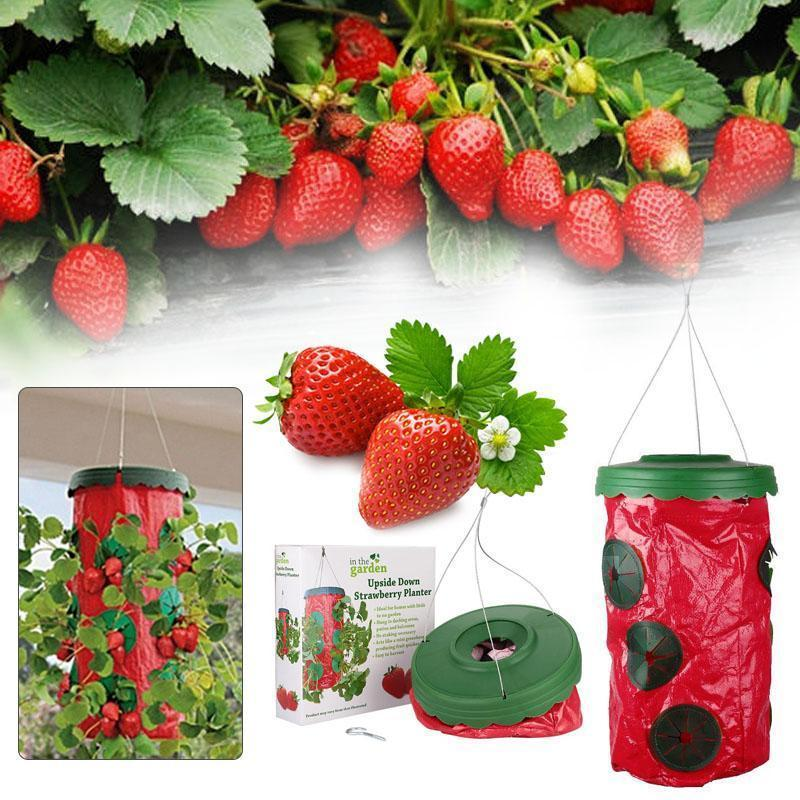Tomato/Strawberry Upside Down Hanging Planter - Alpha Bargain