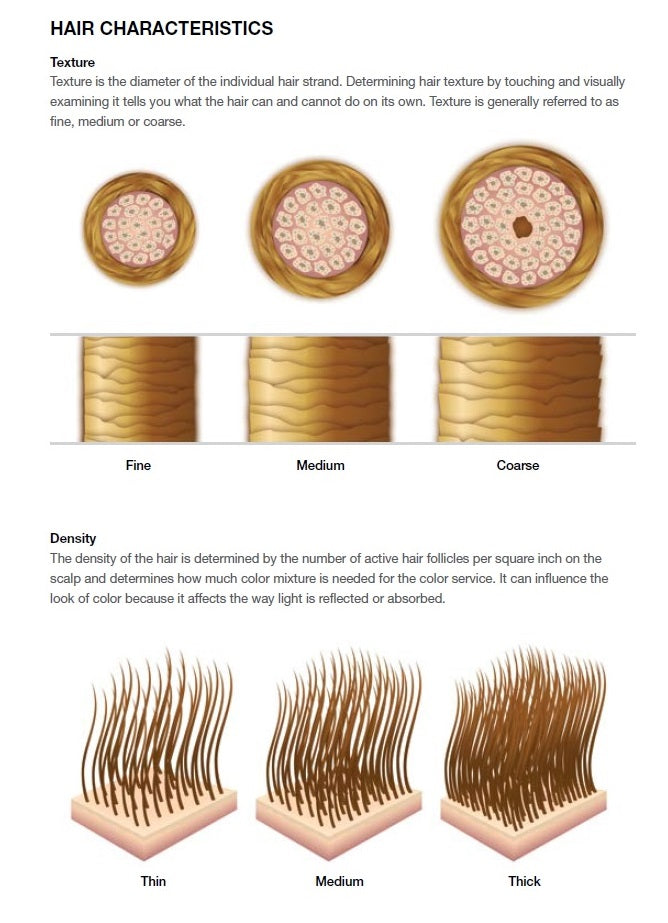 An infographic image showing the difference between fine hair and thick hair