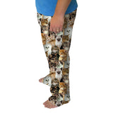Kitties Rule Mens Adult Pant