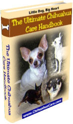 The Ultimate Guide to Taking Care of Your Chihuahua