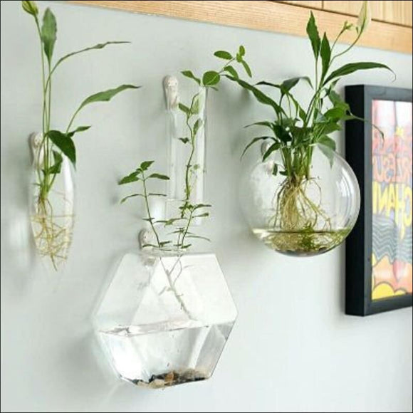 1pcs handmade wall decor clear terrarium vase 🌱 - AmazinTrends.com