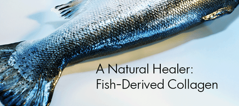 Scientific proof: Fish Collagen Naturally Heals the Skin