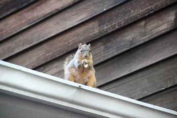 Preventing squirrels in chimney with squirrel-proof chimney cap