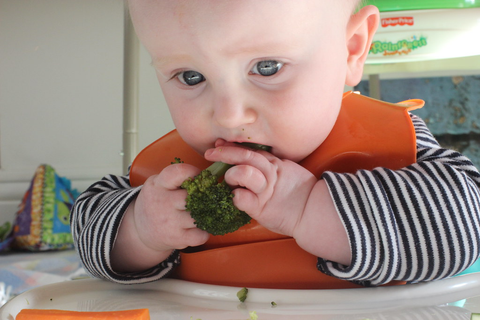 Baby Led Weaning 5 Months