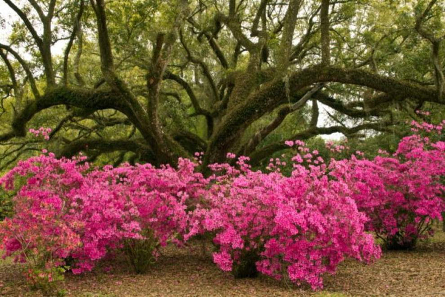 7 Top New Orleans Landscapes