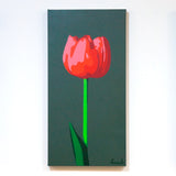 Light Red Tulip