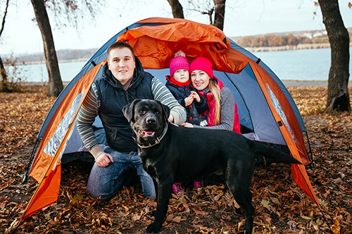camping, active dogs