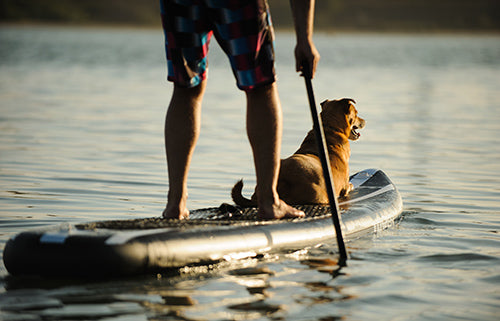 paddle boarding, active dogs