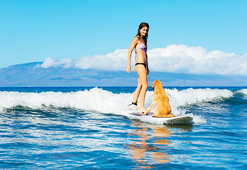 surfing, active dogs