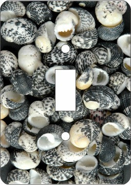 Mud Snail Sea Shells Switch Plate Cover