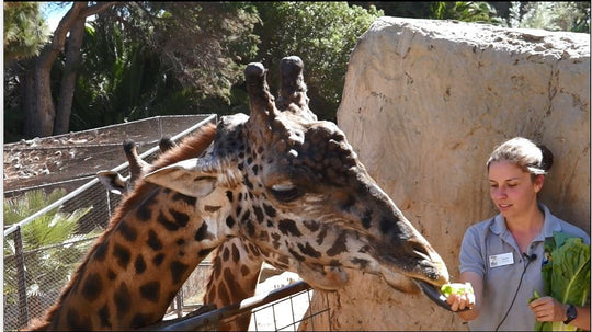 Animal Chat: Giraffe Edition - Explore Science