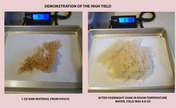 "IRISH MOSS  ""Sea Moss""  dried, Hi-Yield (6 Oz resealable pouch, Product of Grenada)"