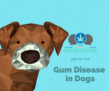CBD for Gum Disease in Dogs