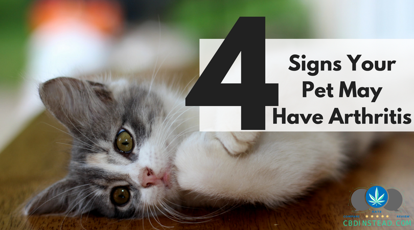 4 Signs Your Pet May Have Arthritis