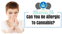 Can You Be Allergic To Cannabis?