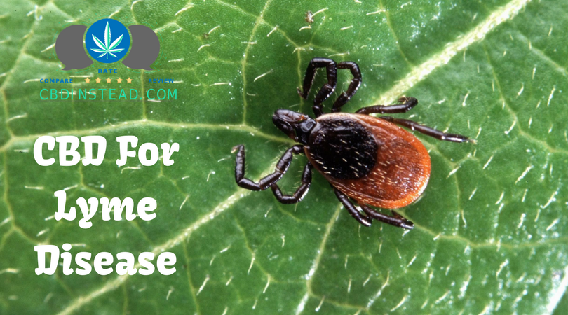 CBD For Lyme Disease – CBD Instead
